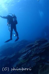 後浜サンゴ