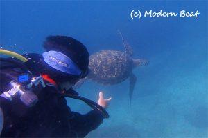 体験ダイバー&ウミガメ